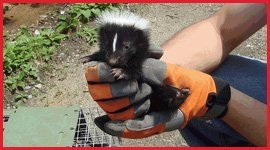 Brampton Wildlife Removal Services