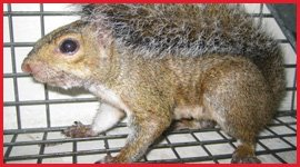 Mississauga Wildlife Removal Services