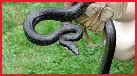 Snake Removal & Control