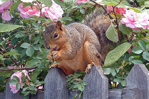 5 Effective Tips To Keep Squirrels Out of Your Garden