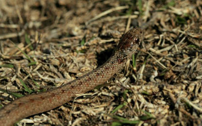 5 Tips To Keep Snakes Out Of The Yard